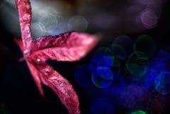 Aún vida preciosa, colores de la naturaleza Foto de archivo libre de regalías