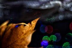Aún vida preciosa, colores de la naturaleza Fotografía de archivo libre de regalías