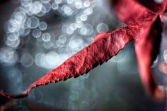 Aún vida preciosa, colores de la naturaleza Fotos de archivo