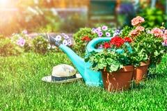 Aún-vida que cultiva un huerto y flor-creciente casera de la flor Foto de archivo