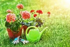 Aún-vida que cultiva un huerto y flor-creciente casera de la flor Fotografía de archivo