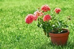 Aún-vida que cultiva un huerto y flor-creciente casera de la flor Fotos de archivo