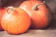 Aún vida rústica con las calabazas anaranjadas maduras en tela Imagenes de archivo