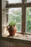 Aún vida rústica con las flores salvajes en jarro marrón de la arcilla Foto de archivo