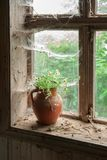 Aún vida rústica con las flores salvajes en jarro marrón de la arcilla Fotos de archivo libres de regalías