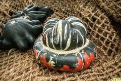 Aún vida rústica de calabazas ornamentales Fotos de archivo
