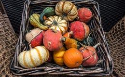 Aún vida rústica de calabazas ornamentales Imagen de archivo libre de regalías