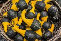 Aún vida rústica de calabazas ornamentales Foto de archivo