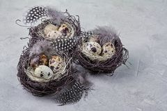Aún vida rústica - huevos de codornices en jerarquía en superficie concreta áspera Imagenes de archivo