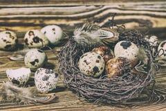 Aún vida rústica - huevos de codornices en jerarquía en superficie concreta áspera Fotos de archivo libres de regalías