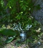 Aún vida romántica con el lirio de los valles en el jardín Imagen de archivo