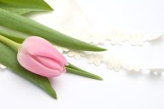 Aún-vida romántica con el tulipán rosado Imagenes de archivo