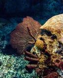 Aún vida subacuática Fotos de archivo libres de regalías