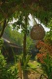 Aún vida tropical Foto de archivo libre de regalías