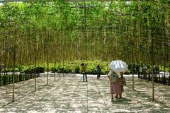 Żałość drzewa przy Ashikaga parkiem w Japonia Zdjęcia Royalty Free