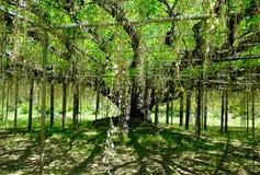 Żałość drzewa przy Ashikaga parkiem w Japonia Obraz Stock