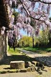 Żałość w Appia Antica ulicie Zdjęcie Royalty Free