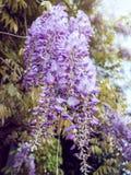 Żałości rośliny zbliżenie Zdjęcie Royalty Free