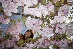 A开花的樱桃树的妇女 库存照片