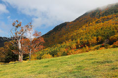 A Beautiful Maple Tree On The Autumn Hillside Under Sunny Sky ~ Royalty Free Stock Images