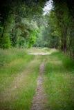 A Beautiful Straight Path Stock Photography