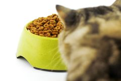 Free A Bengal Cat Looks Up Into Above A Bowl Of Dry Cat Food. Stock Photo - 100580070