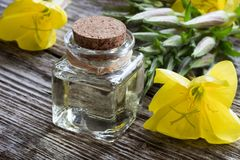 Free A Bottle Of Evening Primrose Oil With Blooming Evening Primrose Stock Images - 102430394