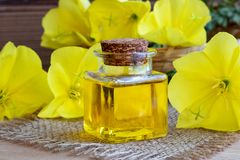 Free A Bottle Of Evening Primrose Oil With Fresh Blooming Evening Pri Royalty Free Stock Photo - 126561125