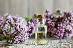 Free A Bottle Of Oregano Essential Oil With Fresh Blooming Oregano Stock Photo - 119359150