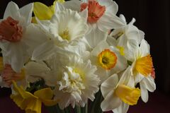 Free A Bouquet Of Flowers On A Dark Background. White Narcissus In A Vase. Flower Gift Concept. Different Varieties Of Narcissus In One Royalty Free Stock Photos - 178774018