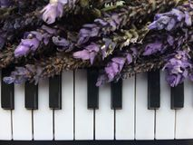 A Bouquets Of Purple Lavender On Piano Keyboard Stock Photos