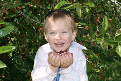 A Boy Eats The Fruit Of Mulberry Royalty Free Stock Photo