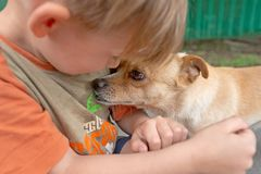 Free A Boy Hugs A Little Dog And Feeds Her Off His Arms, Concept Of Friendship And Trust Royalty Free Stock Images - 149555449