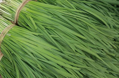 A Bunch Of Chives Royalty Free Stock Photo