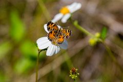 Free A Butterfly Stock Photography - 111236152
