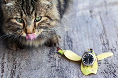 A Cat Wants Her Breakfast Royalty Free Stock Photo