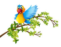 A Colorful Parrot On A Branch Of A Tree Royalty Free Stock Images