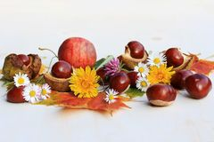 Free A Colourful Autumn With Flowers, Chestnuts And Apples Stock Photos - 102043103