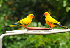 Free A Colourful Parrots Royalty Free Stock Photography - 11453757