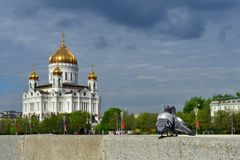 A Couple Of Pigeons In Front Of The Cathedral Of Christ The Savior. Moscow, Russia.
