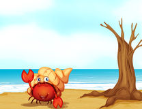 A Crab With A Shell At The Seashore Stock Images