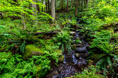 A Crystal Stream Flowing Through A Beautiful Primeval Rain Forest Stock Images