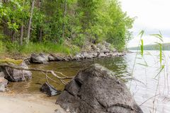 Free A Dead Tree On The Shore Of The Saimaa Lake In The Linnansaari National Park In Finland - 2 Stock Images - 154976774