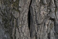 Free A Deep Crack In The Trunk Of A Fruit Tree Stock Photos - 176711623