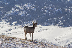 Free A Deer Looking Down A Hill Royalty Free Stock Images - 39066199