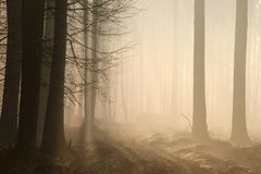 Free A Dirt Road Through The Early Spring Deciduous Forest In Foggy Weather Branches Of Oak Trees Backlit By Morning Sun Dense Fog And Stock Photos - 139557793