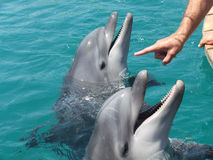 A DOLPHIN Royalty Free Stock Photography