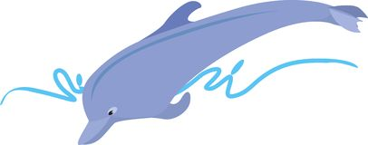 A Dolphin Stock Image