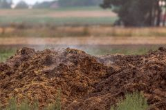 Free A Dung Heap In The Field Royalty Free Stock Photo - 142084785