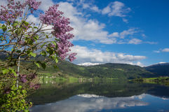 Free A Fjord In Norway Stock Photo - 43541460